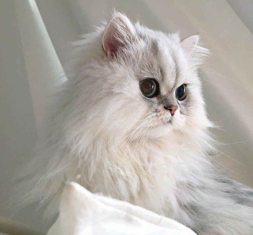 Something Special Felineaesthetic แมว