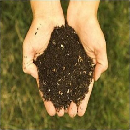 how to get rid of moles in garden