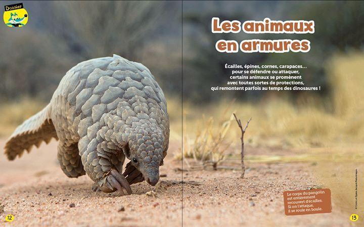 9a7db7feefc7 La CITES (Convention sur le commerce international des espèces de faune et  de flore sauvages