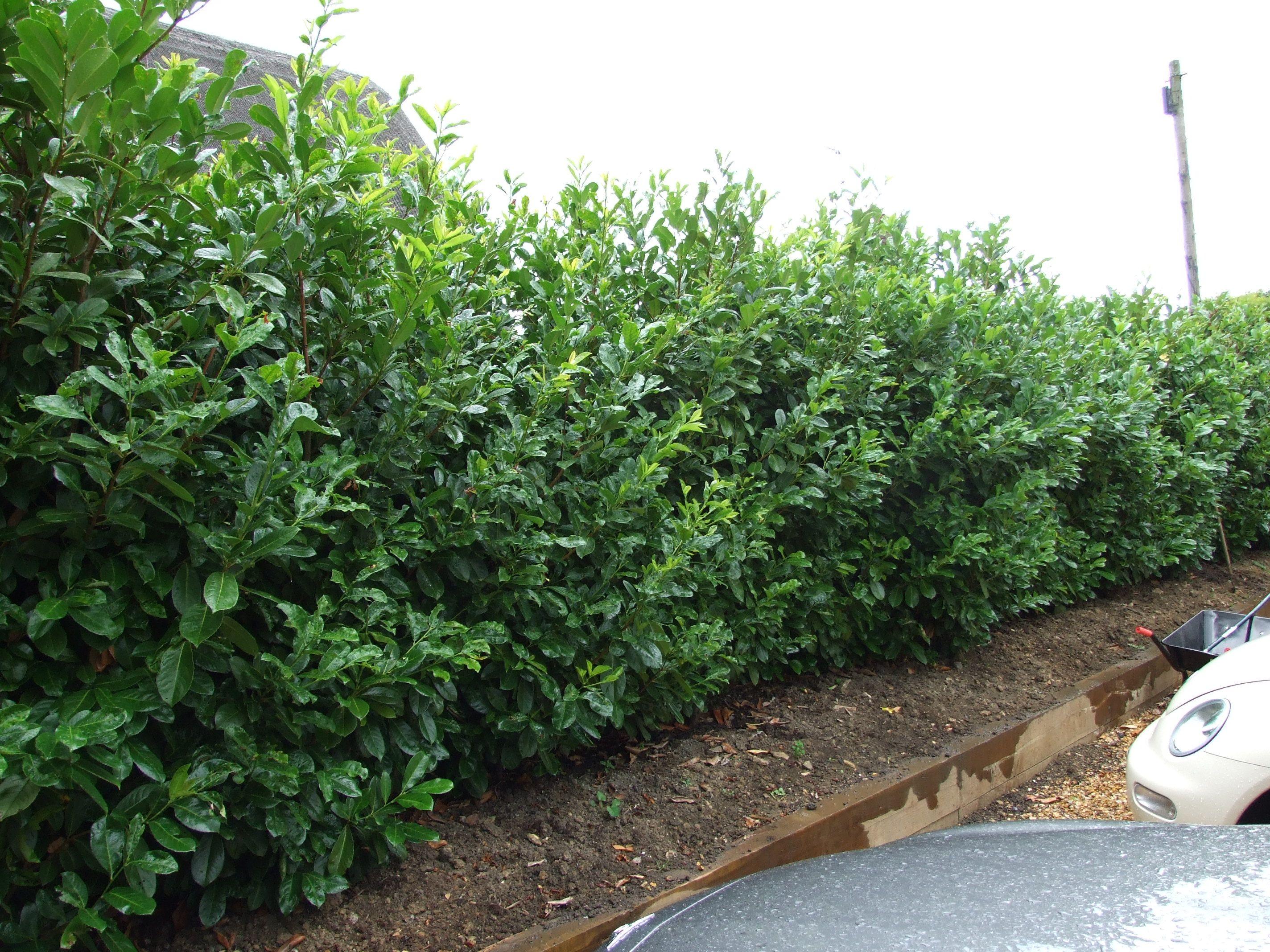 Shade Garden Under Tree Landscaping