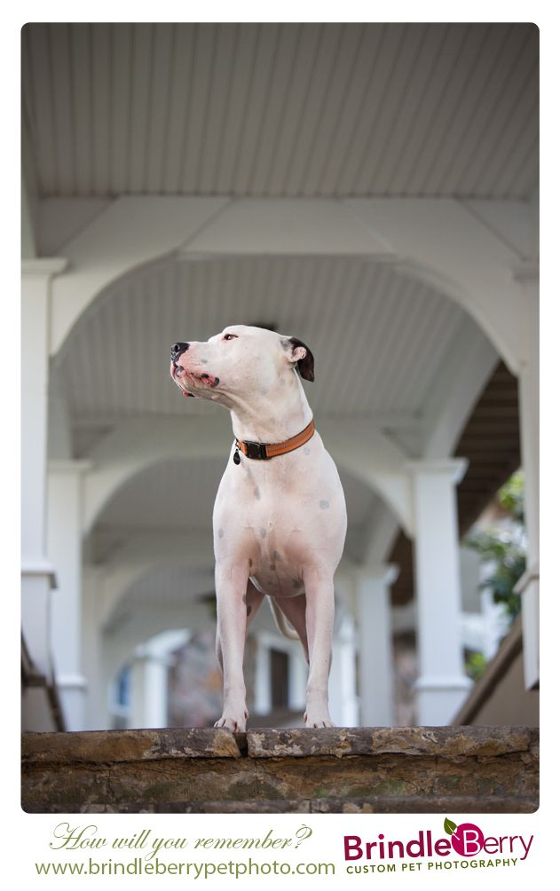 "This is Finn ""the handsome"". www.brindleberrypetphoto.com"