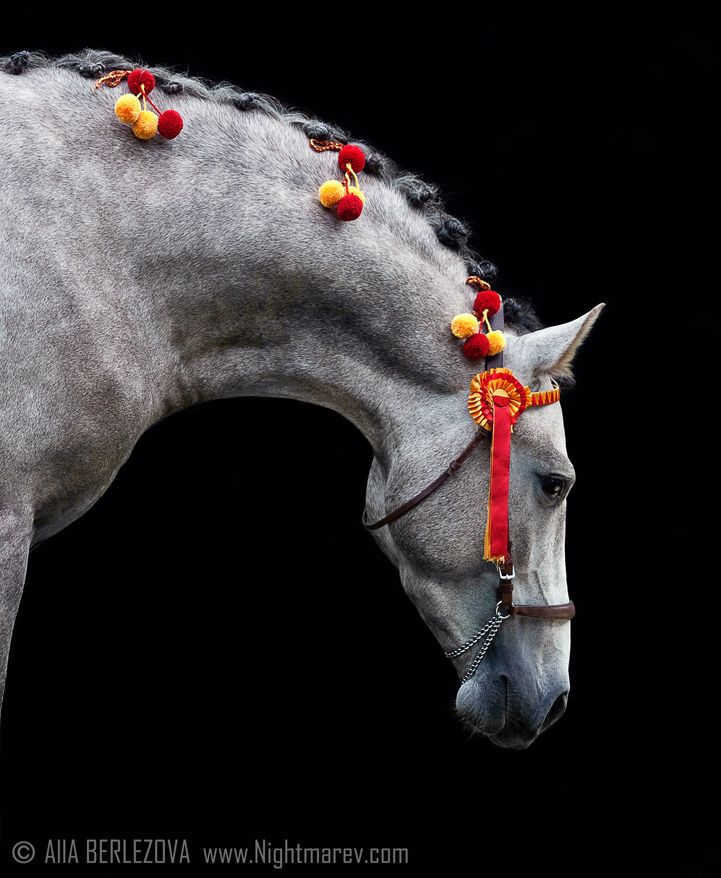 Spanish Beauty By Nightmare V On Deviantart Horse Braiding Horse Mane Horse Love