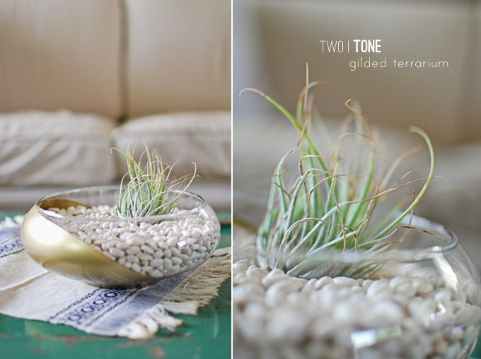 with beans! - - Lauren Elise Crafted - Blog - DIY Project: Two-Tone Gilded Air Plant Terrarium