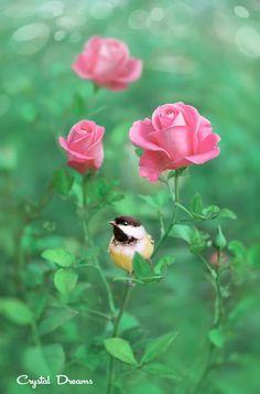 """Morning in the Rose Garden"" by Tatiana Krylova on 500px"