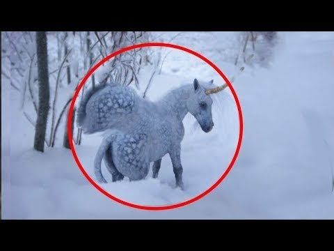 5 Unicorns Caught On Camera Real Life Unicorns Are