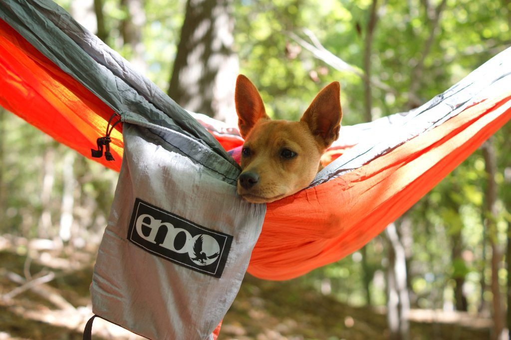 Ultimate Dog Camping Gear List PLUS Printable Checklist ...