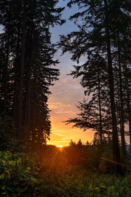 картинка красивого заката в лесу репертуаре очень много