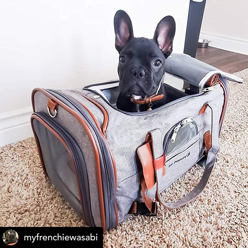 Amazon Com Mr Peanut S Airline Approved Soft Sided Pet Carrier Low Profile Gold Series In 2020 Pet Carriers Airline Approved Pet Carrier Airline Approved