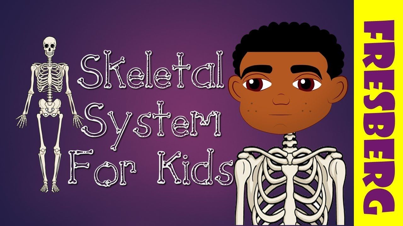 What Is The Skeletal System Introduction To The Skeletal System For Kid Human Body Systems Skeletal System Bone System [ 720 x 1280 Pixel ]