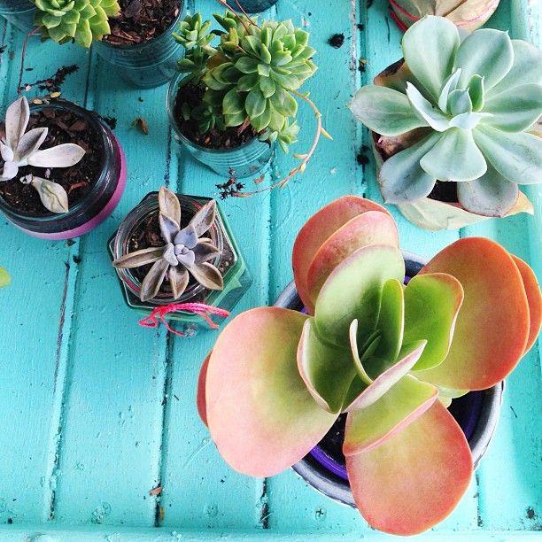 Close up. Man I love a good #succulent. #Padgram