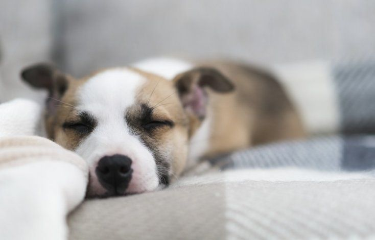 tratamiento de parasitos intestinales en perros