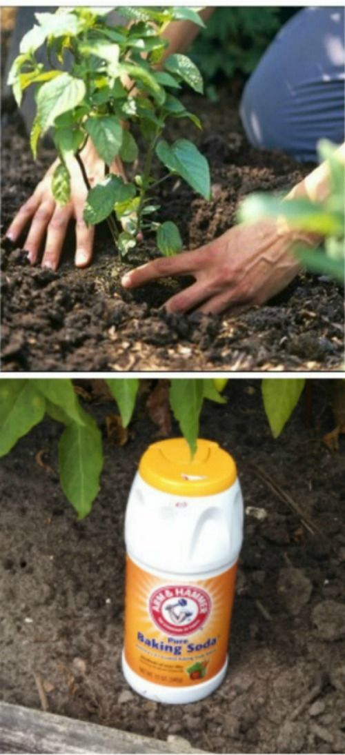 23 garden tips hacks