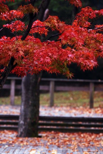 Autumn colors #autumnleavesfalling