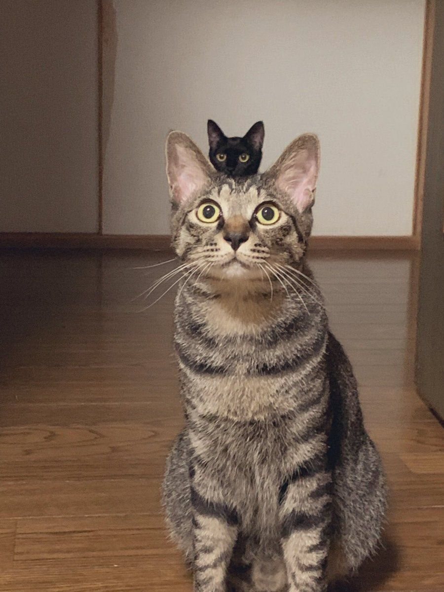 ニギリ🌷 on Katzen, Süßeste haustiere, Ausgestopftes tier