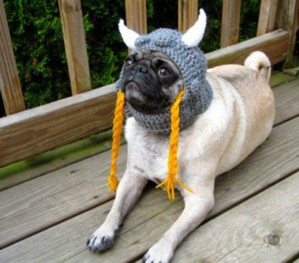 Hunde hundebekleidung wikinger