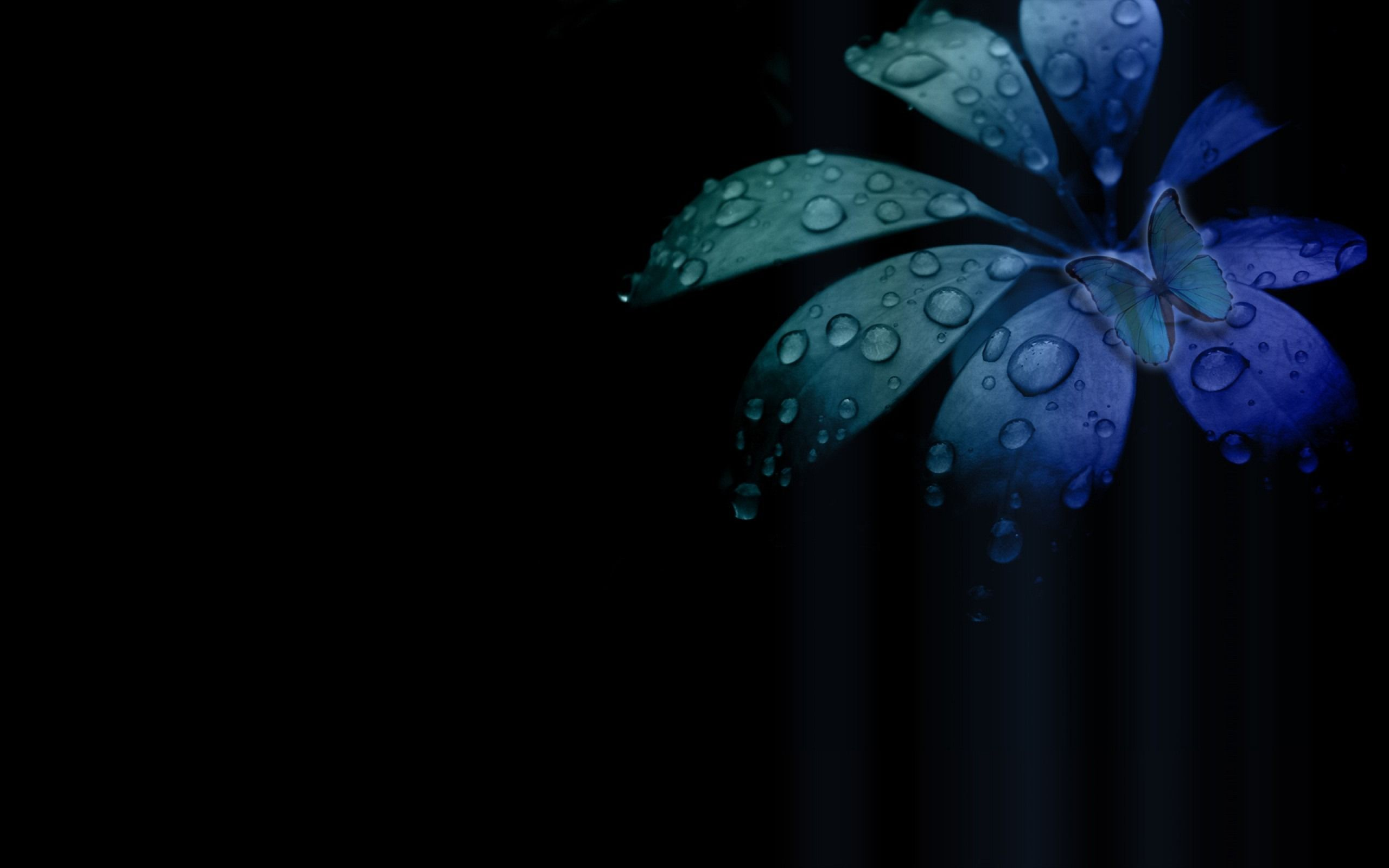 Blue Butterfly Flower Wallpaper