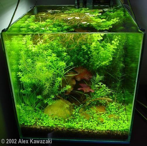 2002 AGA Aquascaping Contest - Entry #12
