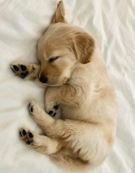 The Top 10 Cutest Puppy in the World for kids 2020 !