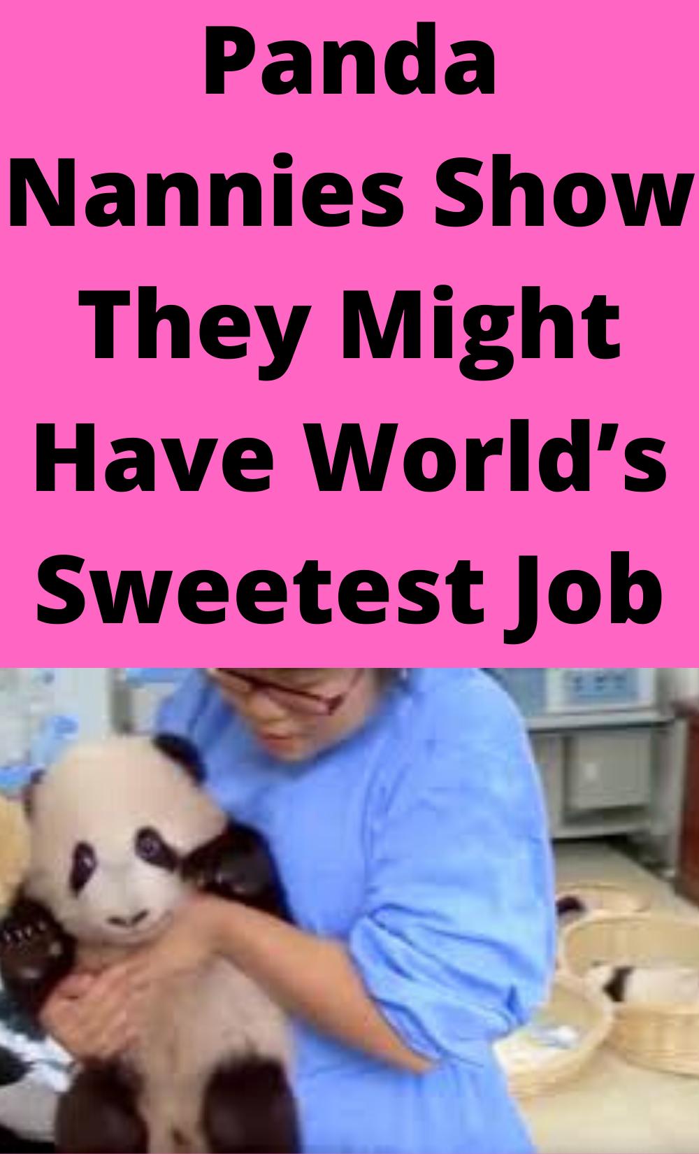 panda nanny melts hearts with daily duties in 2020  nanny