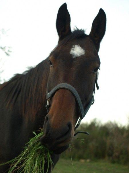 Jezdecký oddíl | Naše stádo