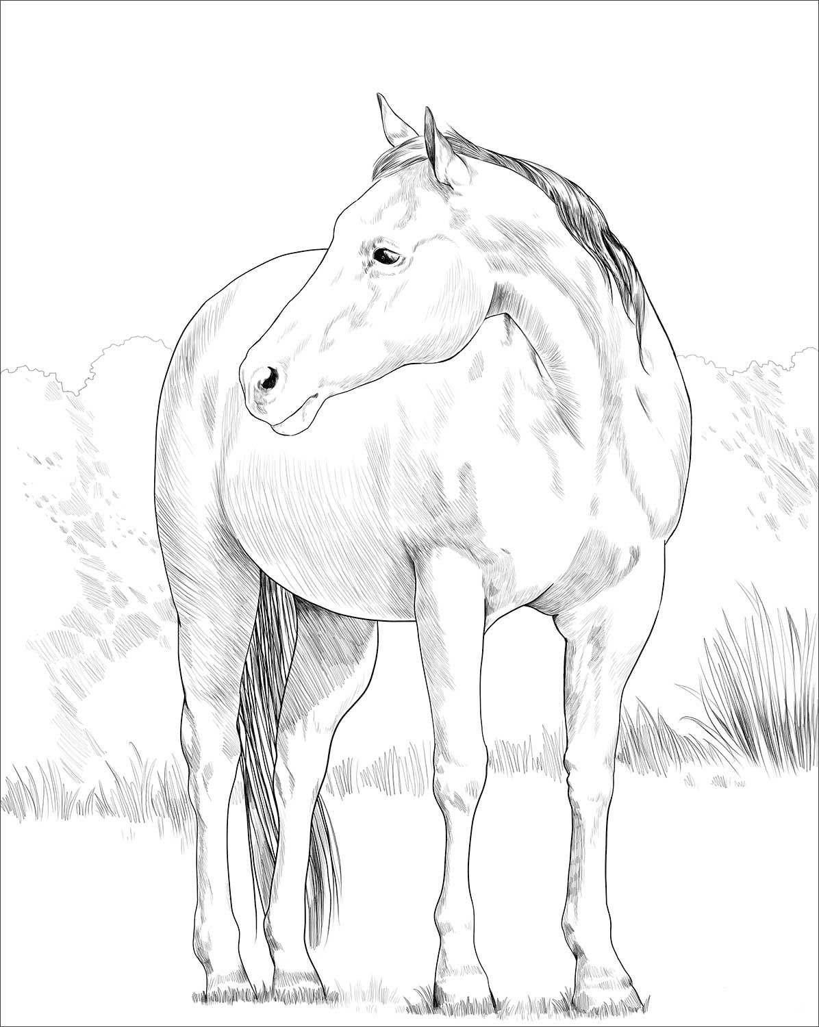 Quarter Horse Coloring Page Horse Coloring Pages Horse Coloring Books Horse Coloring