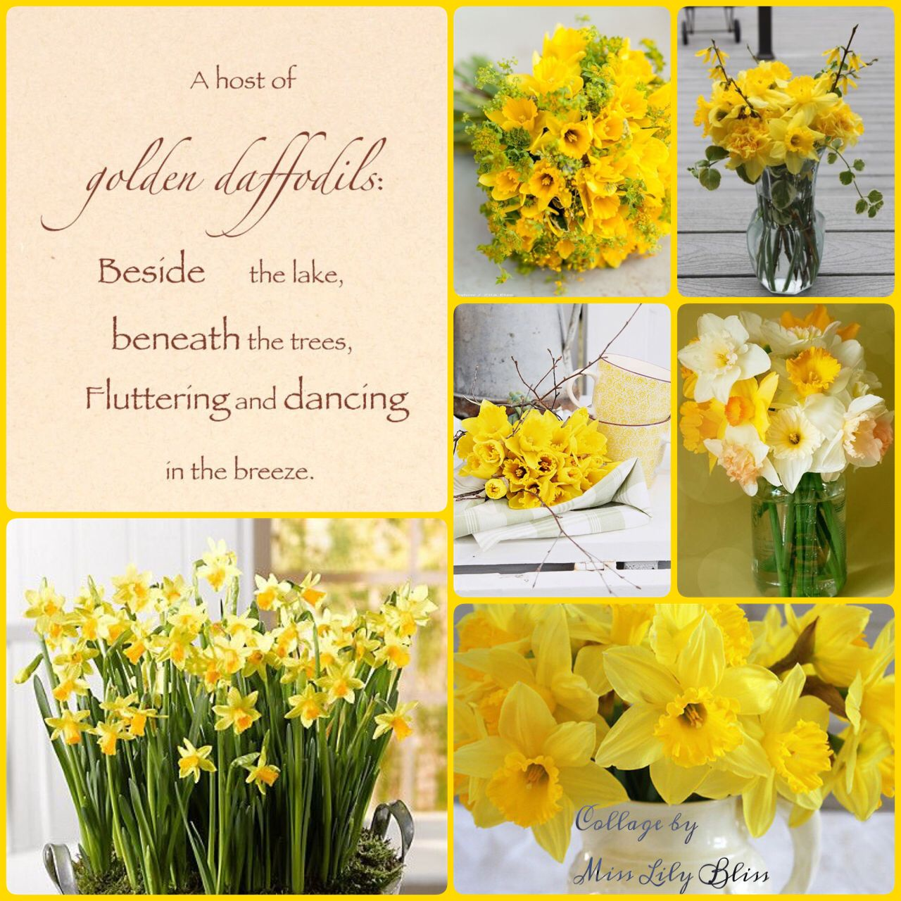 Daffodil Collage By Miss Lily Bliss Favorite Flowers Pinterest