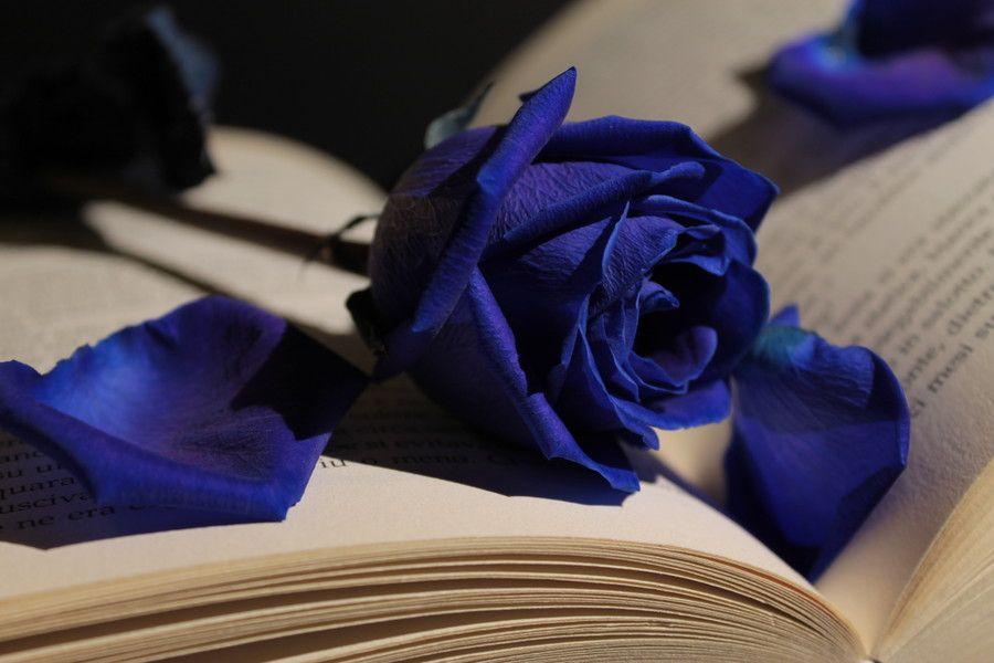 Bleu Blue Rose Rosas Azuis Flores Azuis Flores Rosas