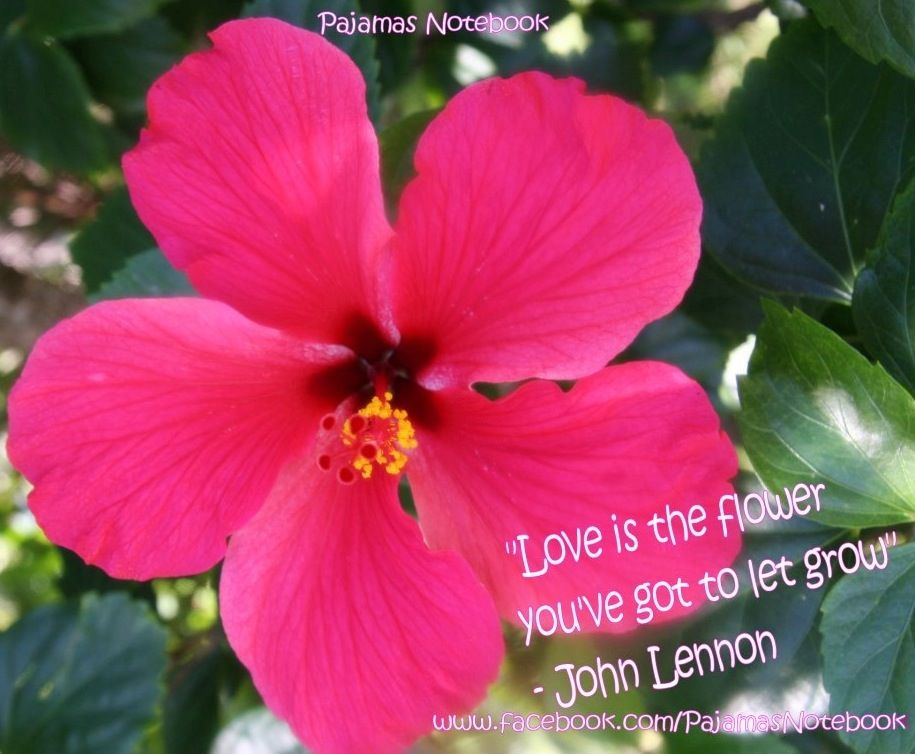 Hibiscus Flower Love Quote Via Www Facebook Com Pajamasnotebook Quotes About Flowers Blooming Flower Quotes Hibiscus Flowers