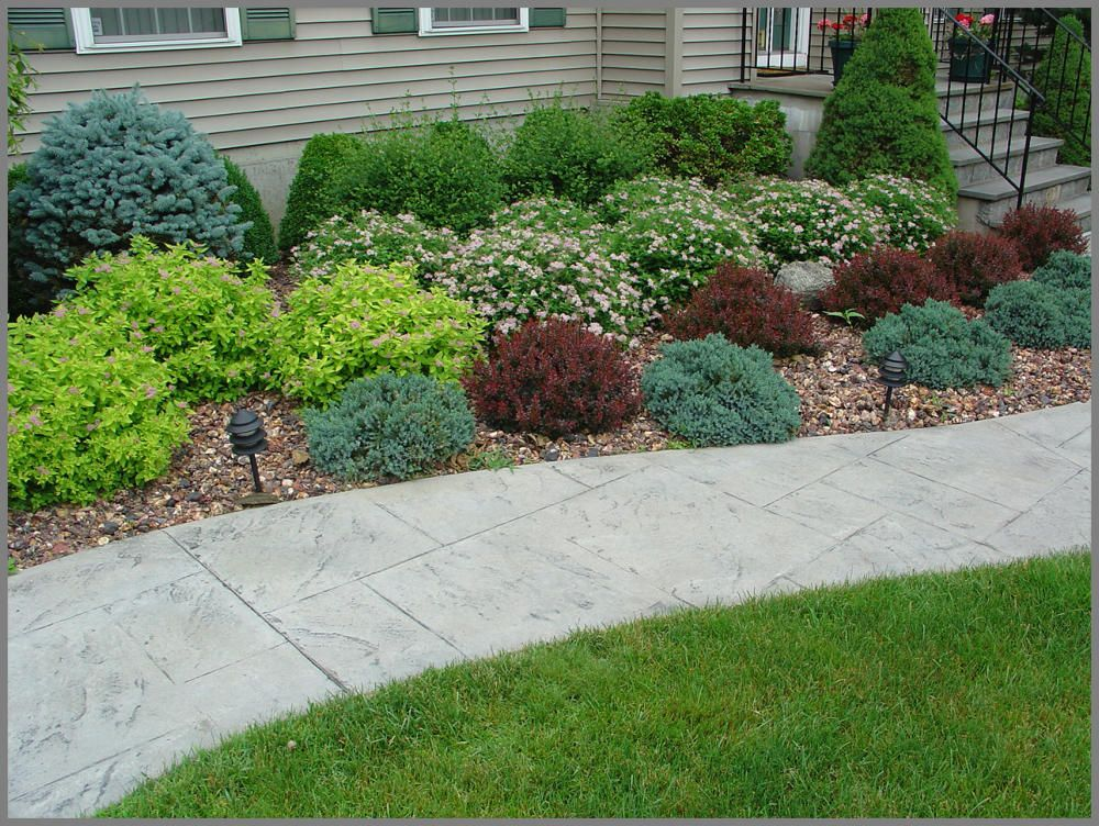 House foundation shrub plantings of barberry spirea blue for Ideas for front yard plants