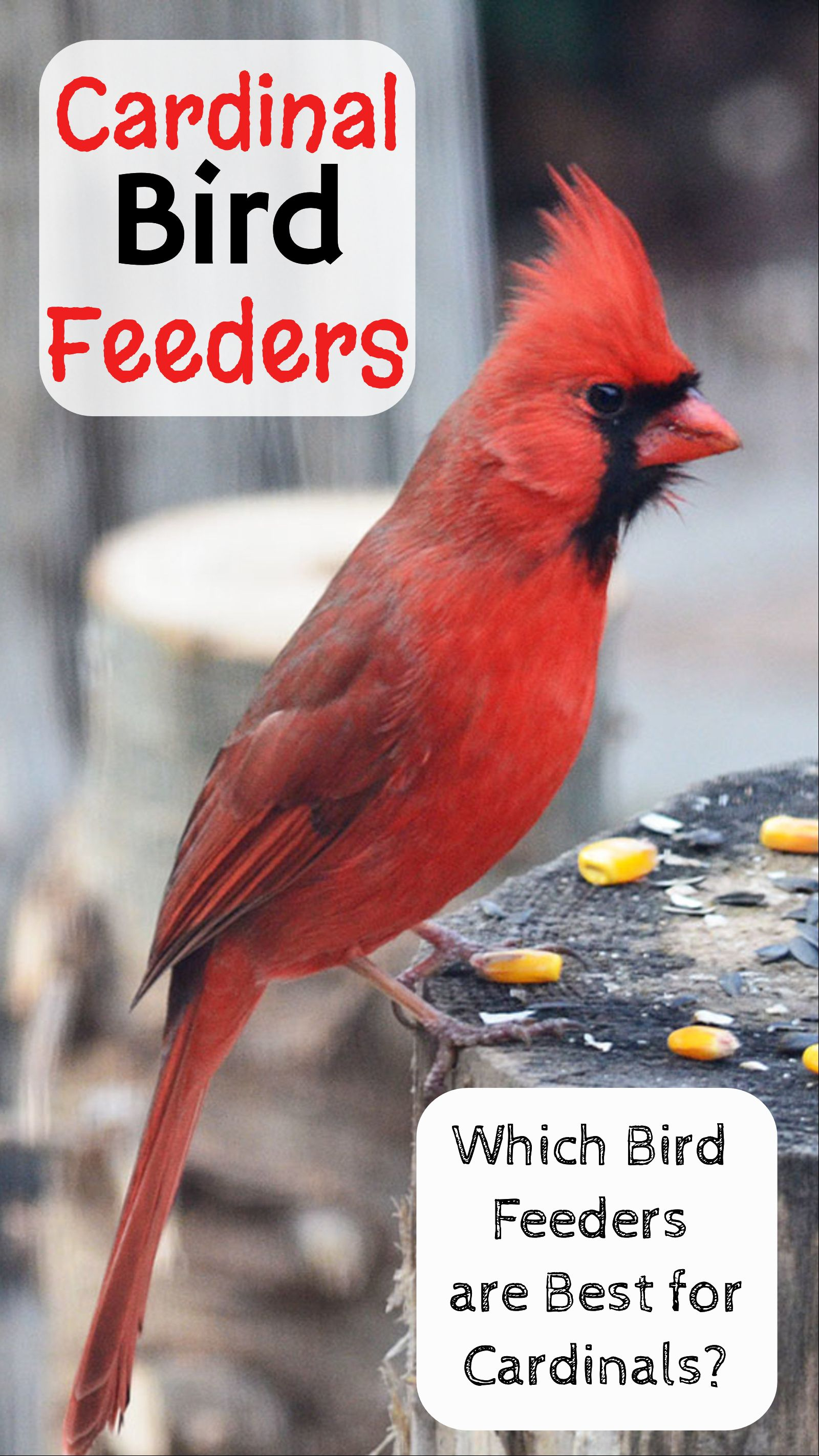 best feeders expensive bird july bestreviews feeder