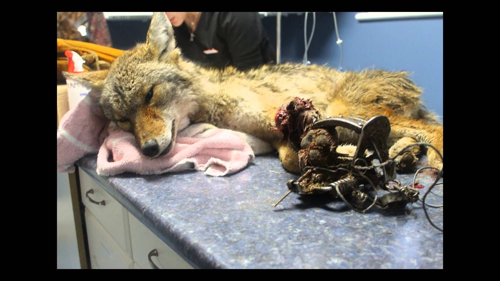 The Truth About The AIHTS Animals, Stop animal cruelty
