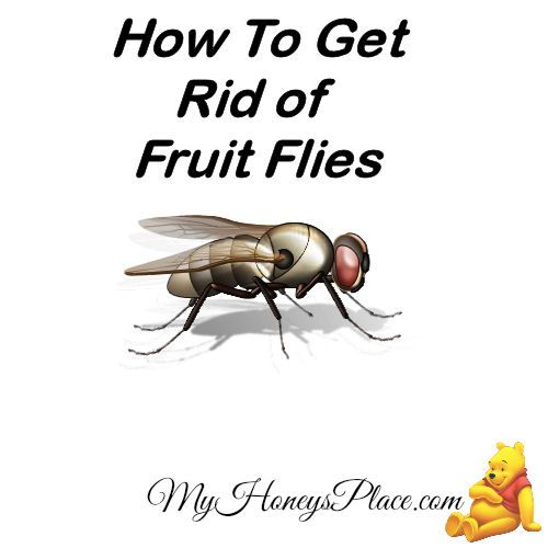 How To Get Rid Of Fruit Flies - My Honeys Place   Recipe ...