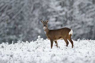 Ronald Kamphuis Weblog: Winter wonderland