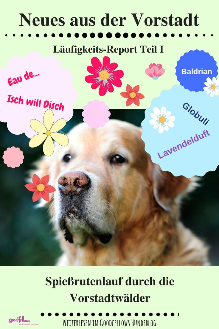 Laufigkeits Report Teil 1 Oder Spiessrutenlauf Durch Die Vorstadtwalder Hund Laufig Laufigkeit Hunde