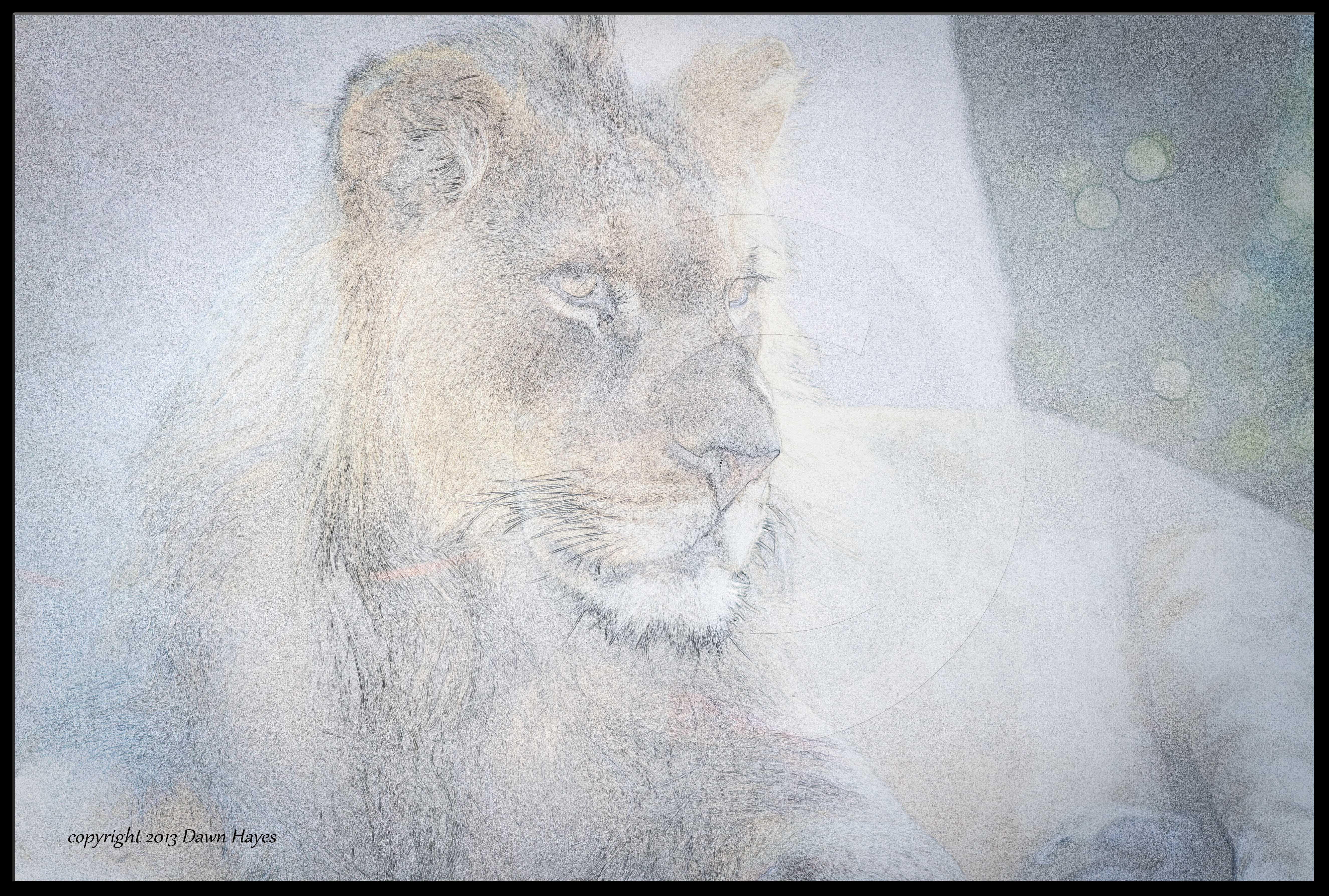 lion sketch 2