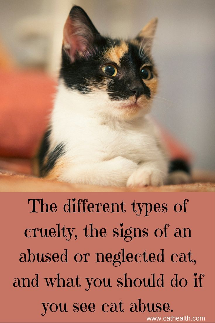 Unfortunately, not everyone is kind to #cats  Cruelty to cats is