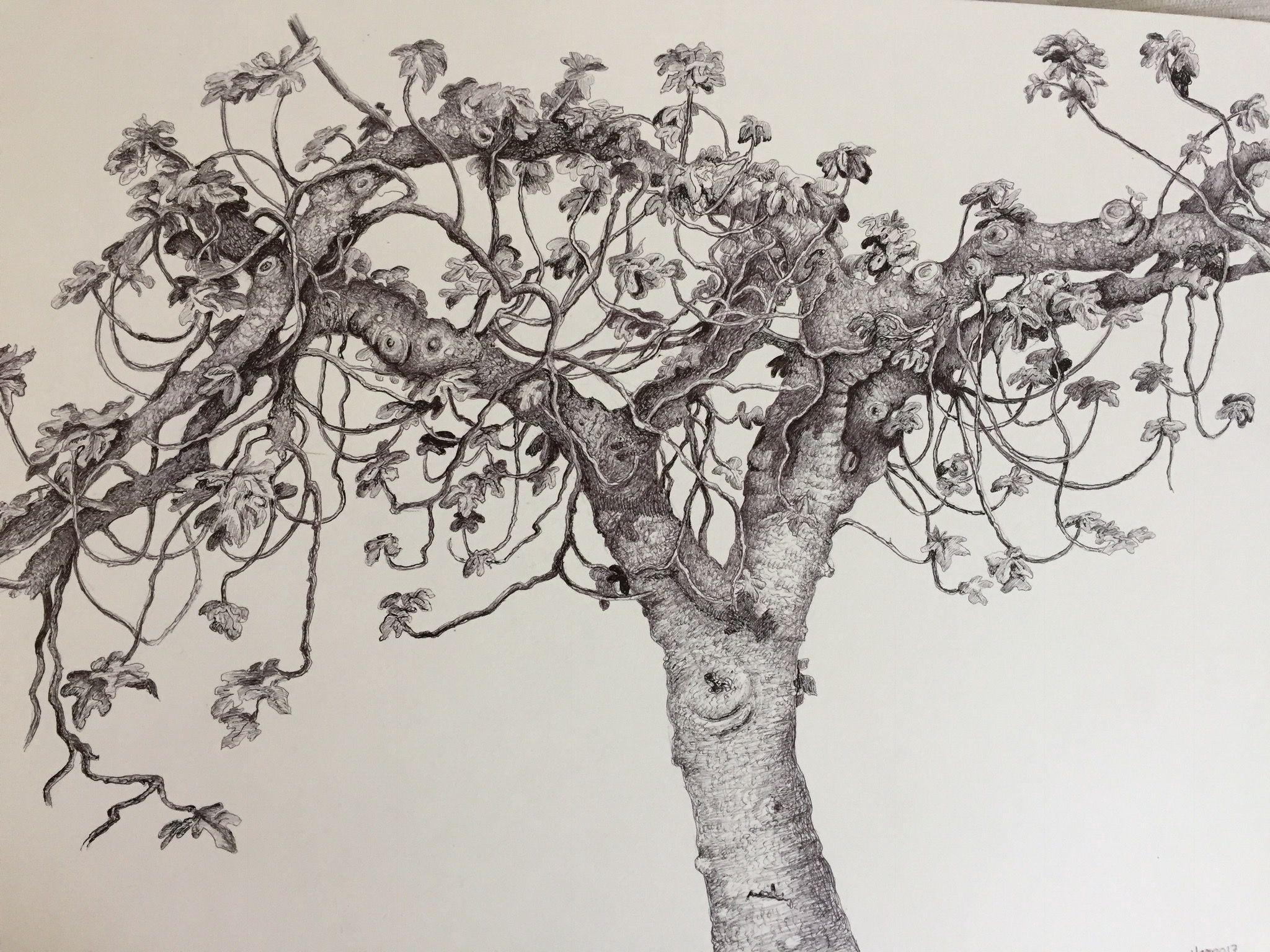 Dibujo De Bolígrafo Infantil Y Libreta Para Colorear: Higuera. Bolígrafo. Pen Drawing