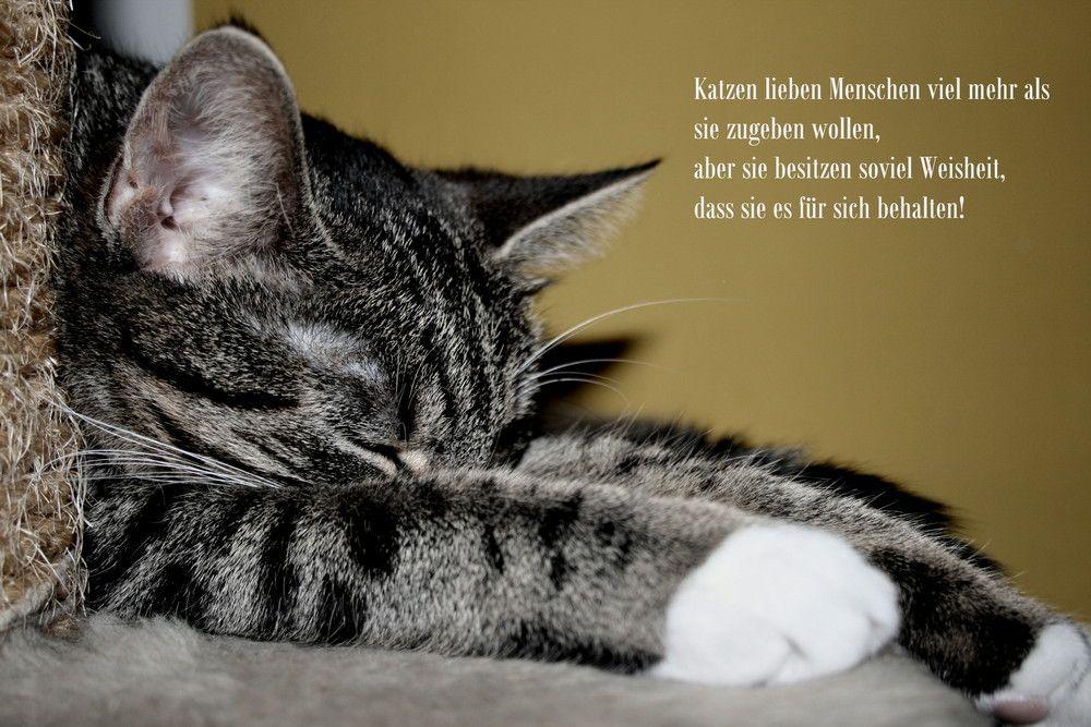Katzenweisheiten! | Katzen zitate, Katzen, Katzen lustige