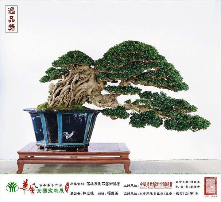 Stunning!    Photo by: Bonsai Do  See: www.bonsaiempire.com  #bonsai