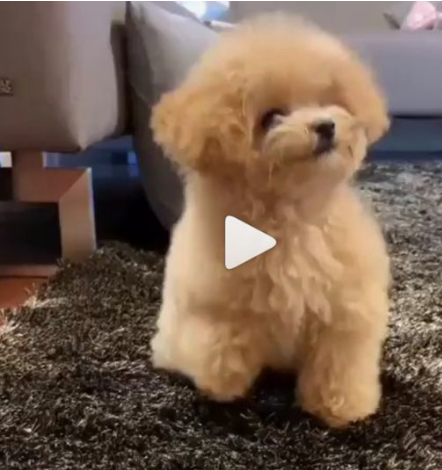 Puppy Doing Great Stuff Most Adorable Puppy Video Scary Dogs Cute Animal Videos Cute Animals