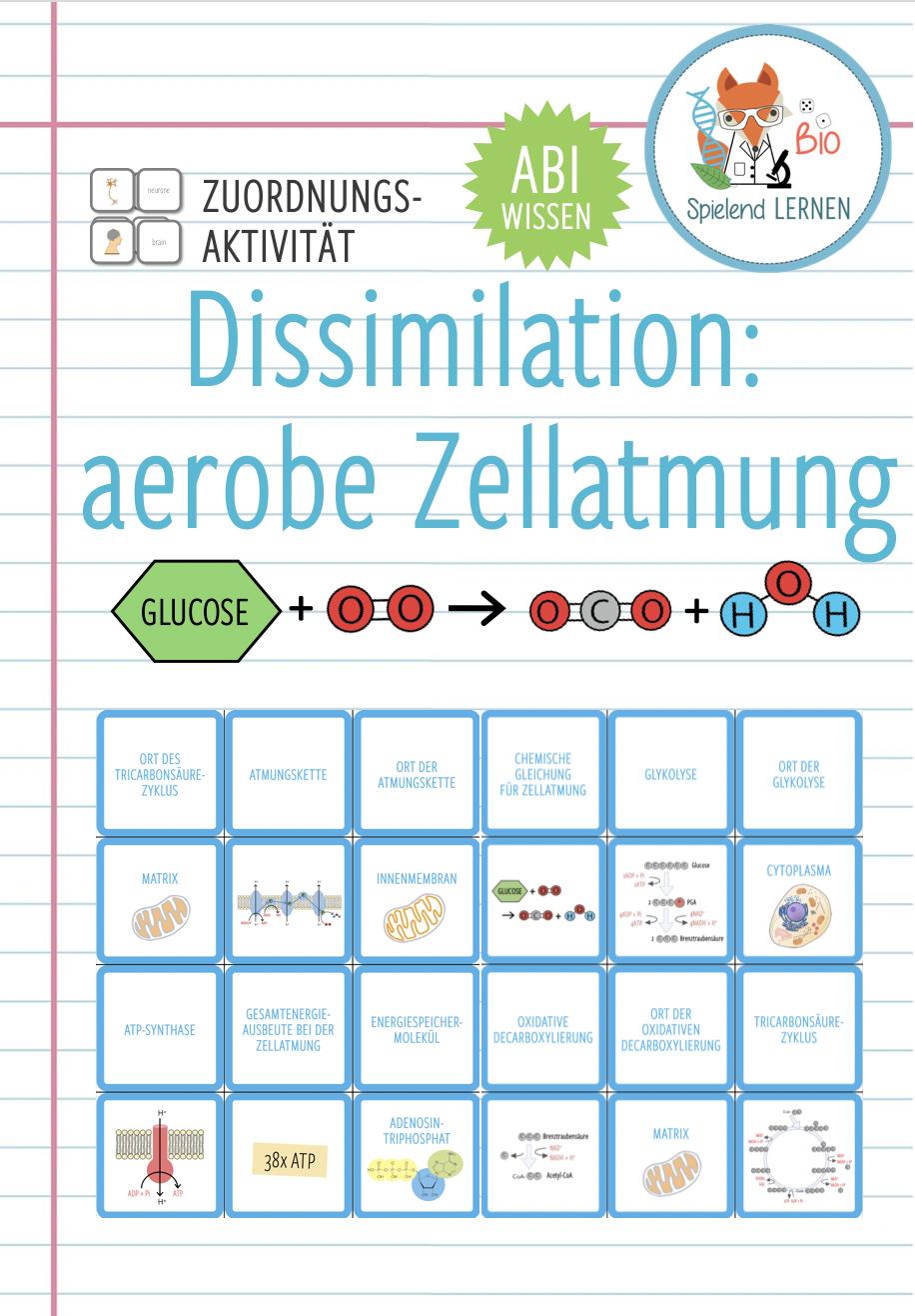 Dissimilation aerobe Zellatmung – Memory® Spiel Abitur ...