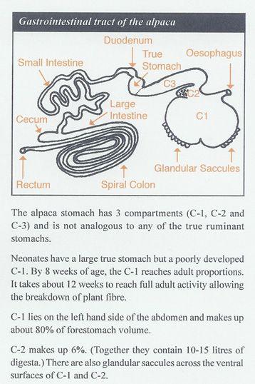 Alpaca Stomach Anatomy Diagram Diy Enthusiasts Wiring Diagrams