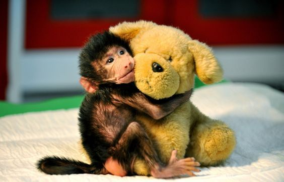 12 Cute Animal Pictures for Your Day