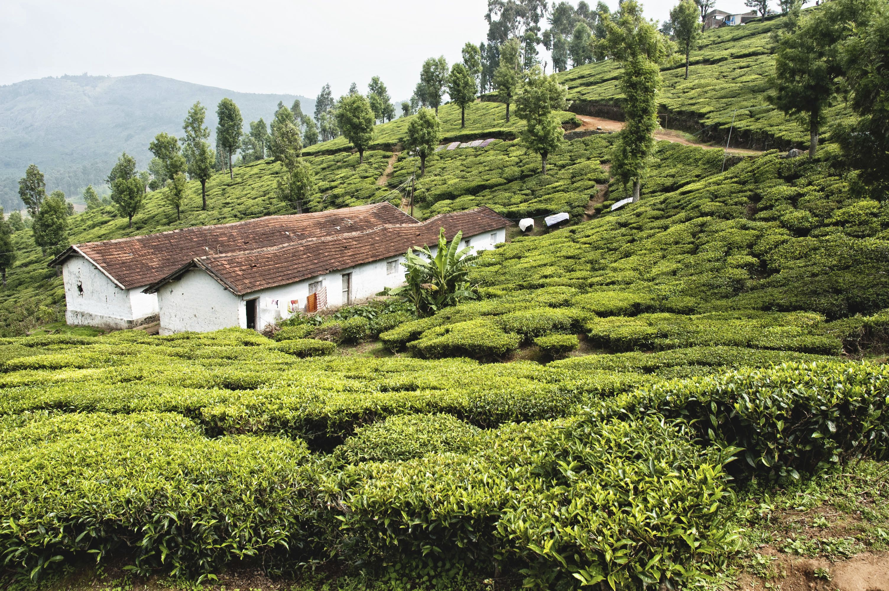 Ooty is the best place for nature lovers | Cool places to ...