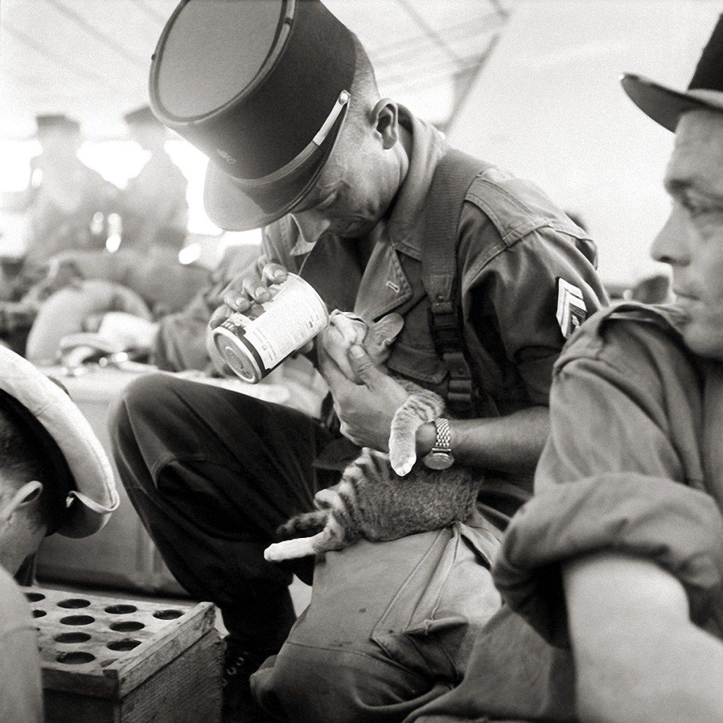Cats at war - French Army, Indochina 1956.