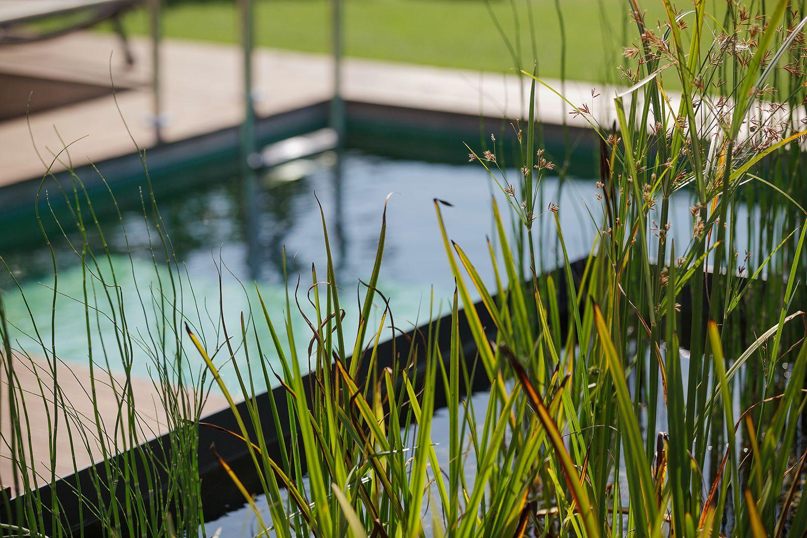 Eingerahmt von Pflanzen wirkt dieser Schwimmteich sehr natürlich