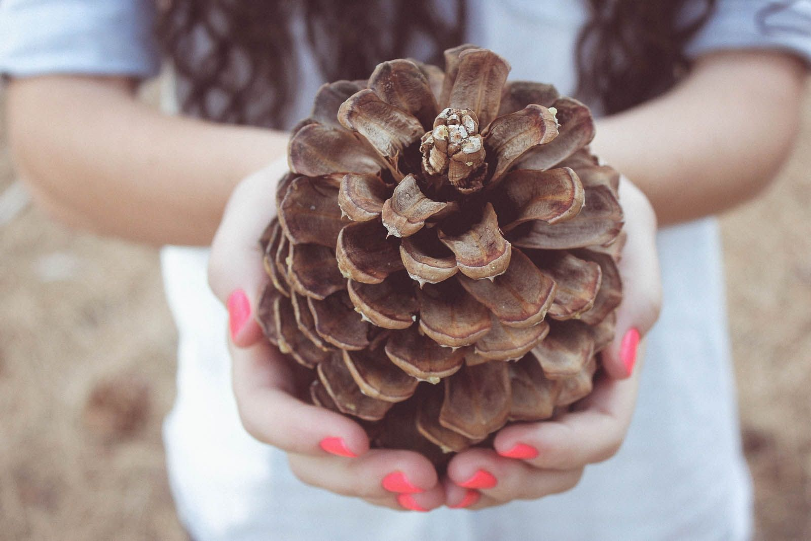 fall, nature
