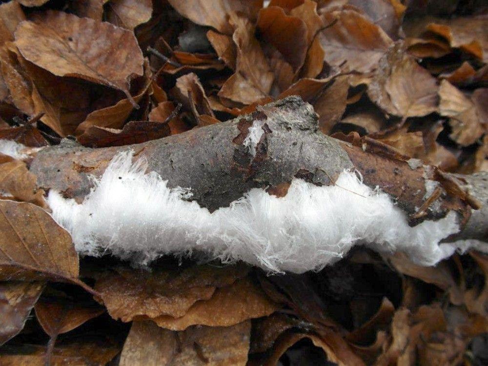 sneeuwhaar-1-570.jpg (1000×750)