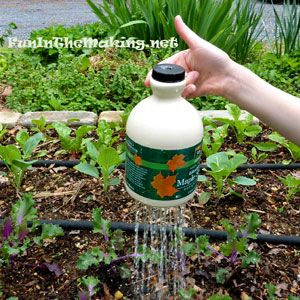 DIY time! Kid-friendly waterer made from a maple syrup jug! (FunInTheMaking.net)