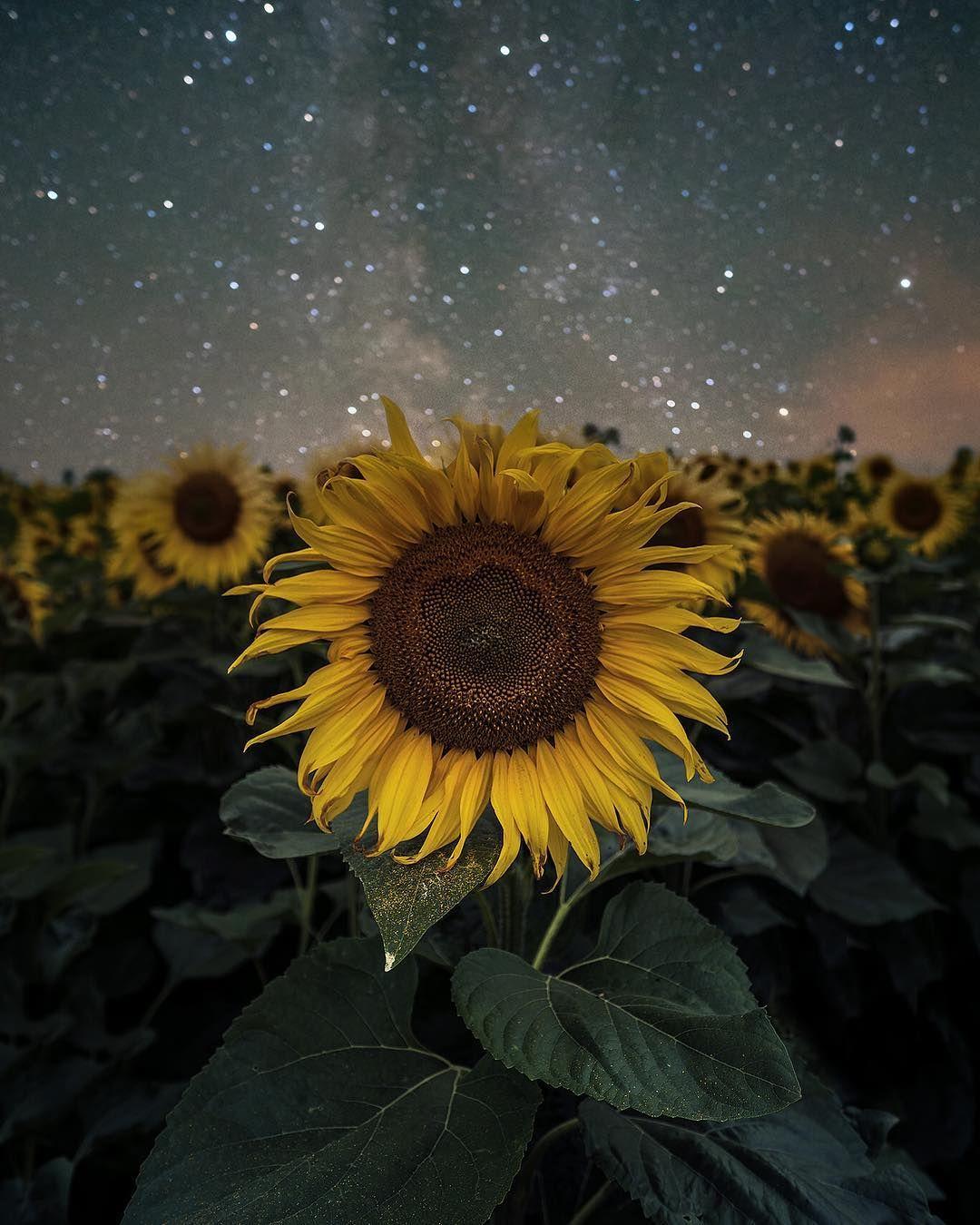Sunflower power 🙌🏻 Ich hoffe Ihr hattet alle einen guten ...